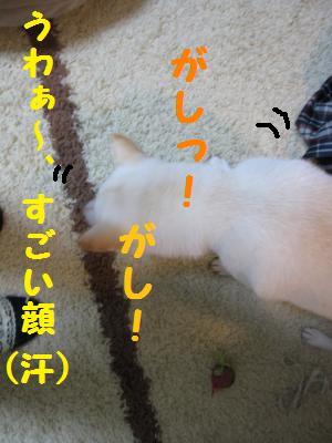 sarada3.jpg