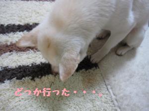 tukushi5.jpg
