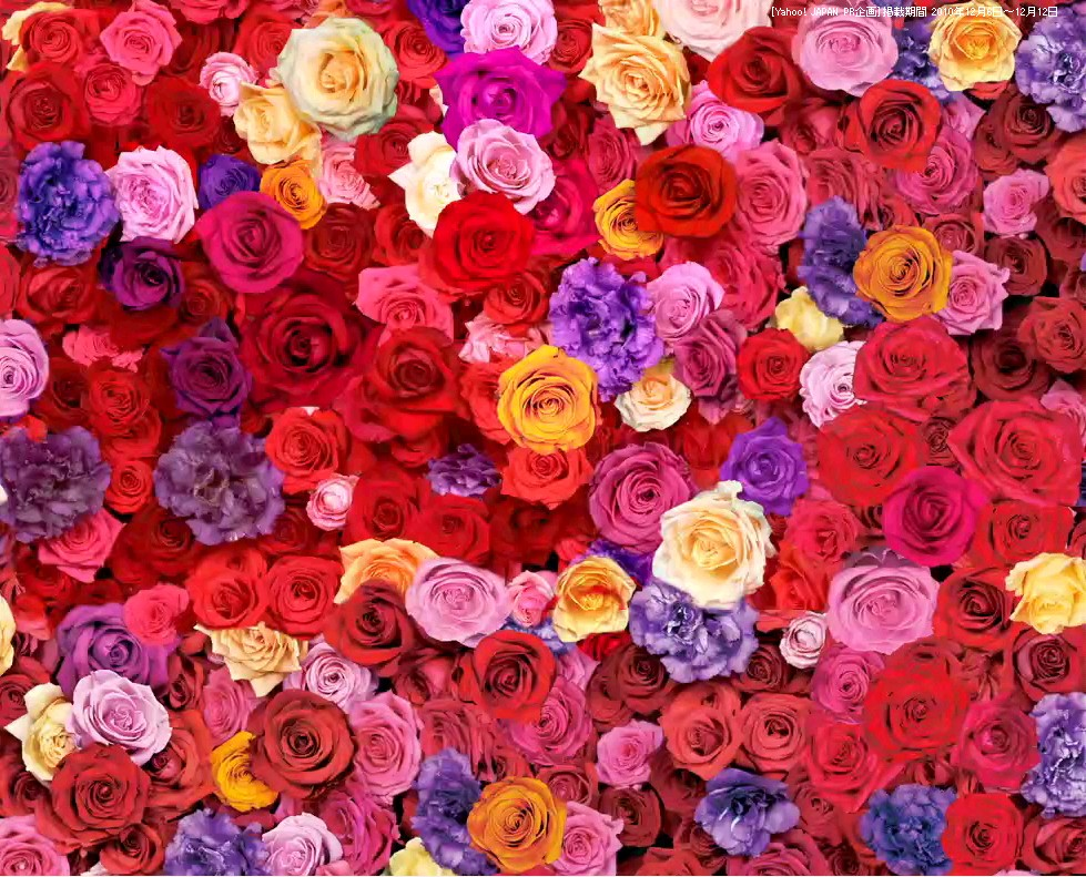 いろんな薔薇