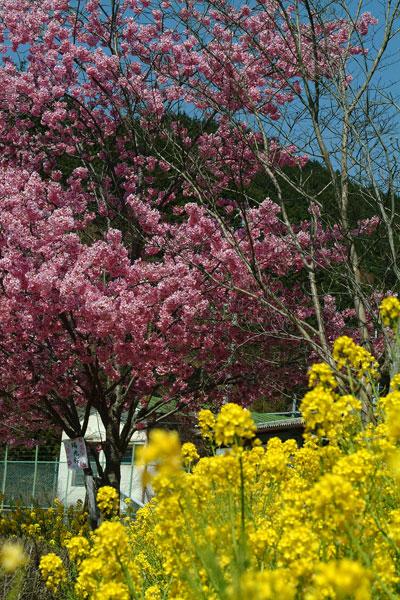2011-04-13_0565.jpg