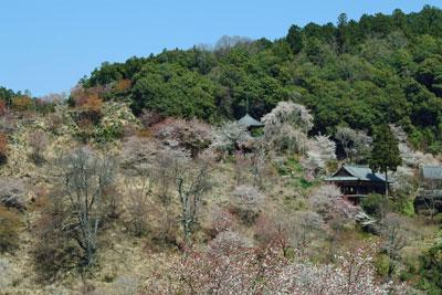 2011-04-13_0670.jpg