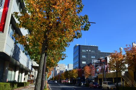 街路樹と青空