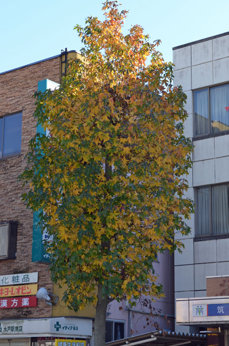 DSC_0963街路樹