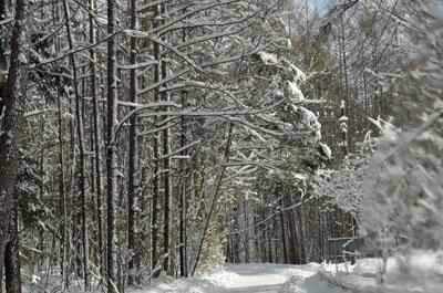 DSC_0826雪道