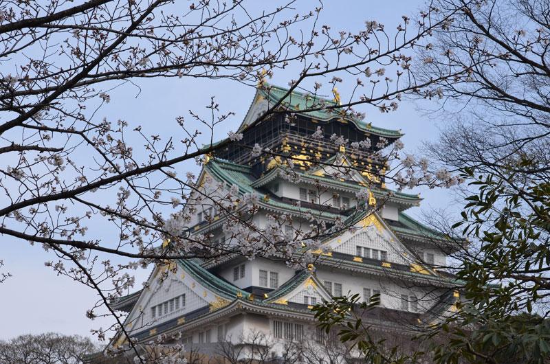 DSC_6715桜大阪城
