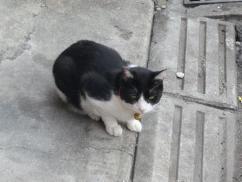 はぎわら-猫