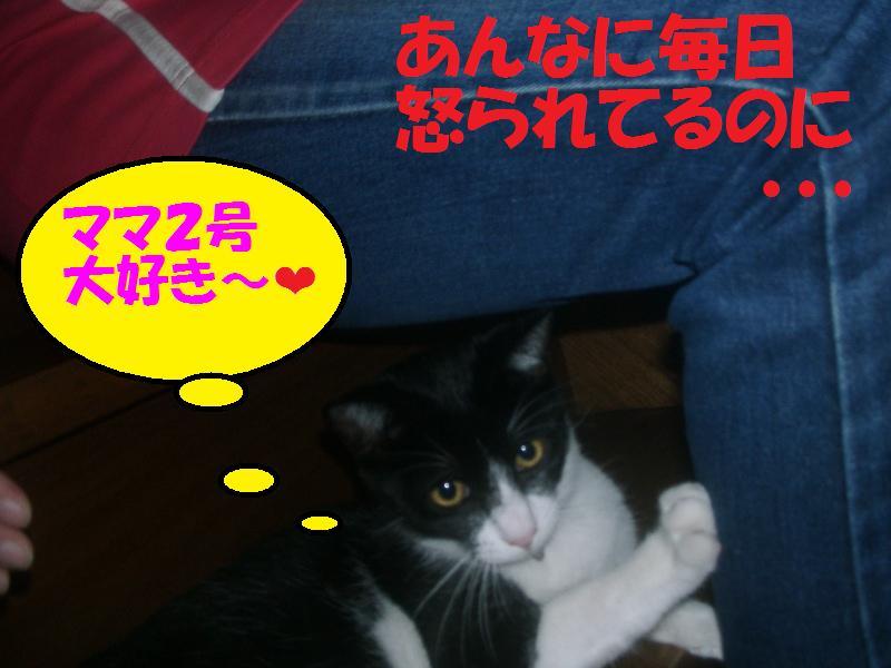 スリスリ(ママ2号大好き!)