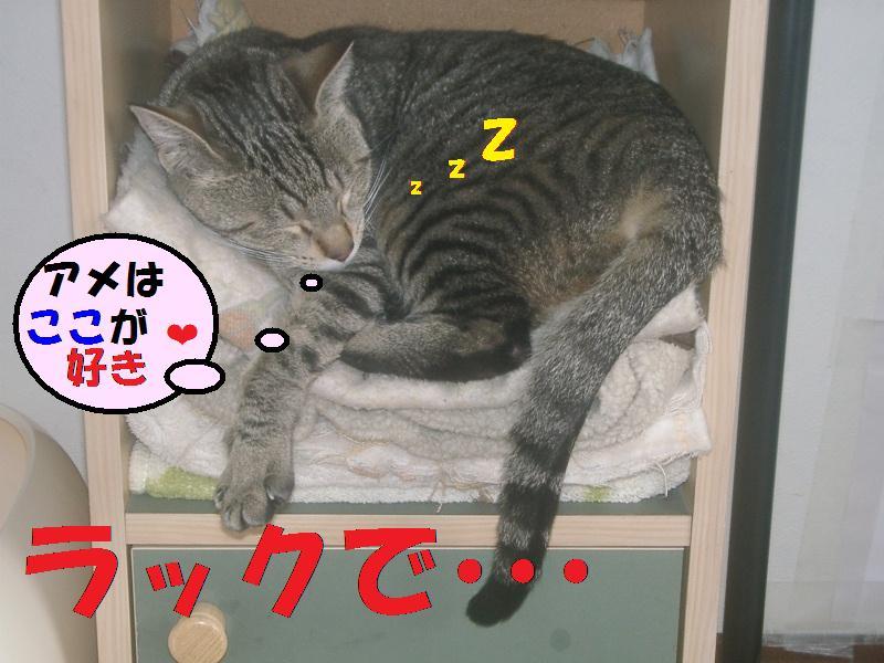 アメちゃんはラックでお昼寝ZZZ