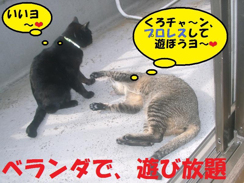 ベランダでおもいっきり遊ぶお猫様達#10084;