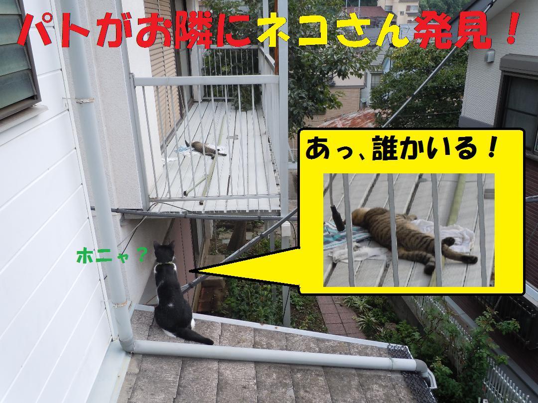 お隣のベランダにネコさん発見!