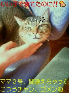 20110126080007.jpg
