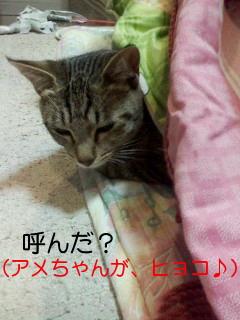 20110126080009.jpg