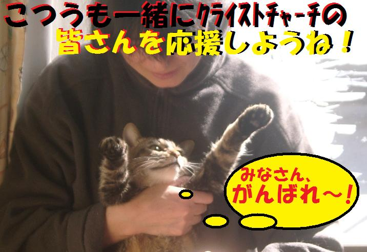 がんばれクライストチャーチ!!