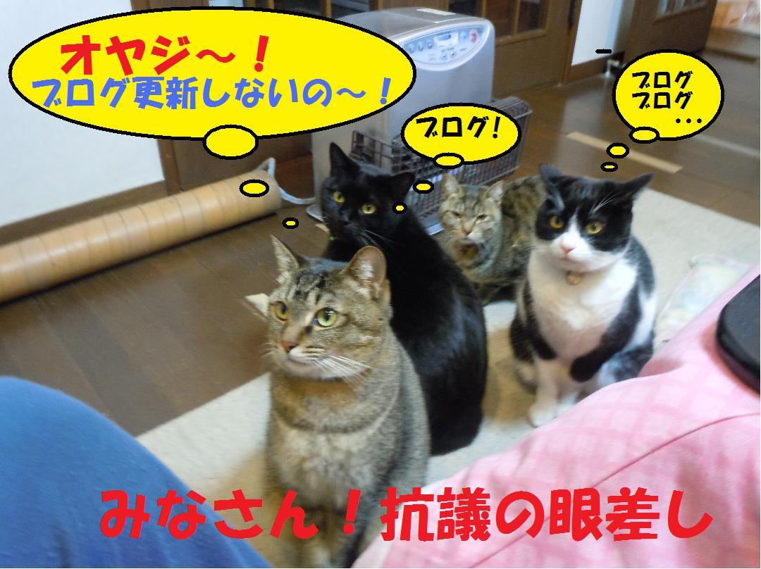 翌日も抗議する!(ブログ更新は?!!)
