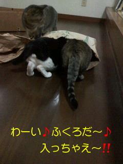 20110425073220.jpg
