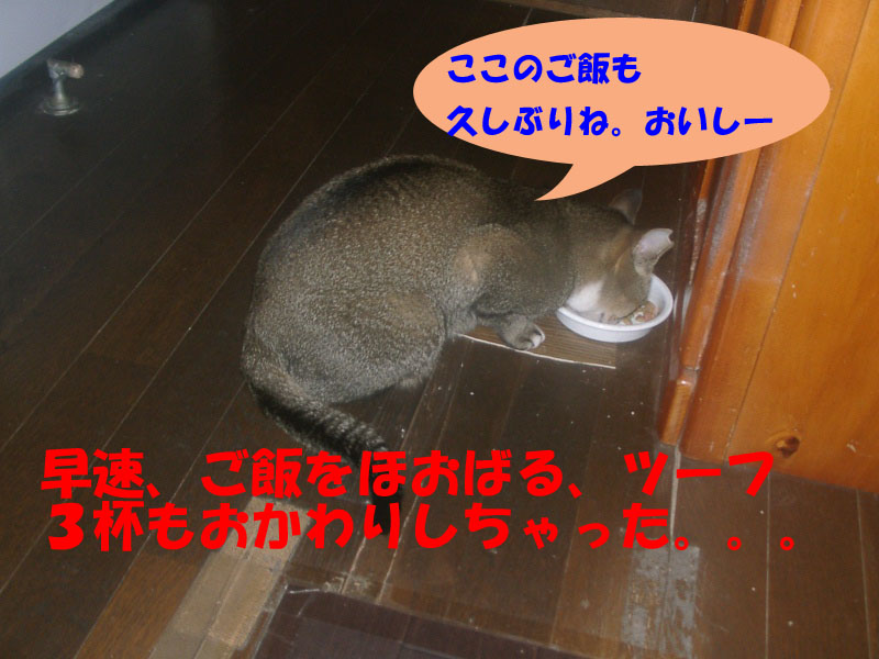 ツーフ帰宅 (11)