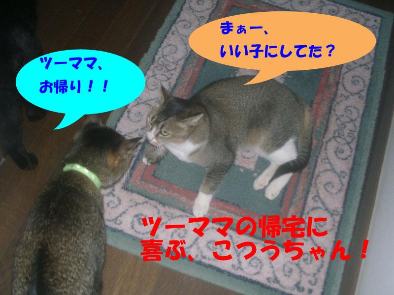 ツーフ帰宅 (2)