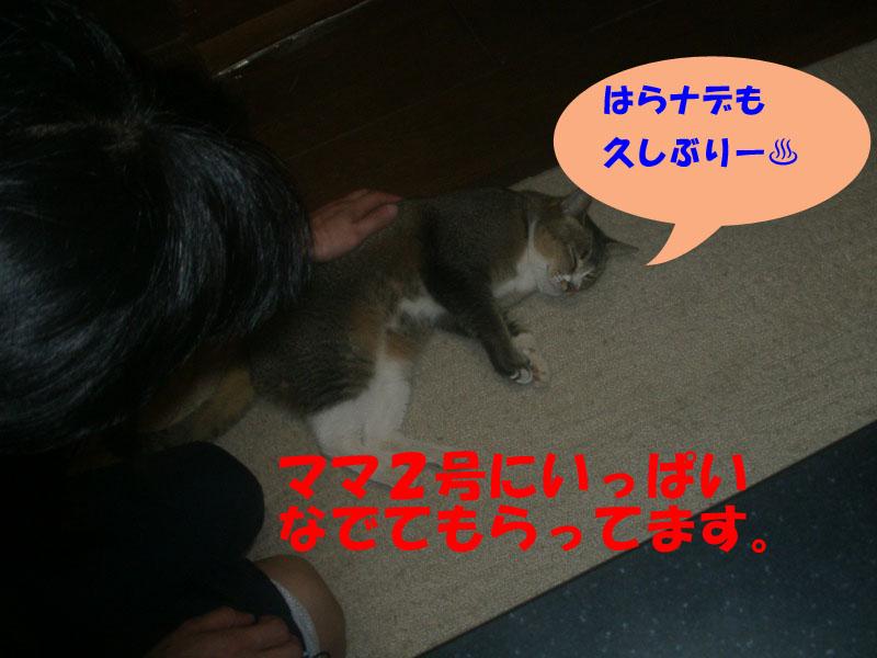 ツーフ帰宅 (3)