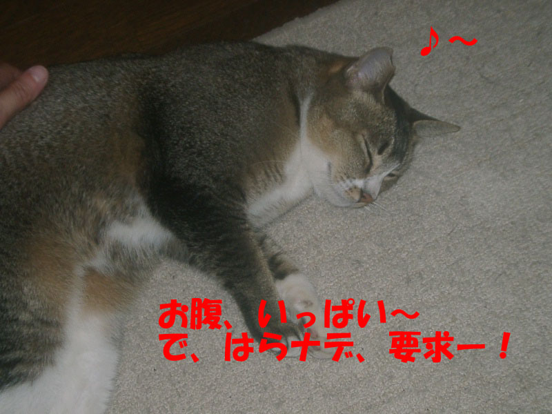 ツーフ帰宅 (4)