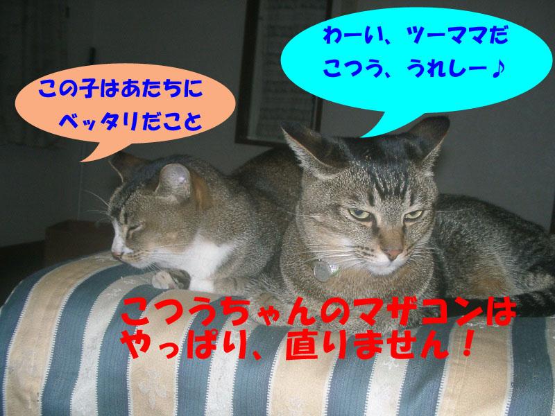 ツーフ帰宅 (7)