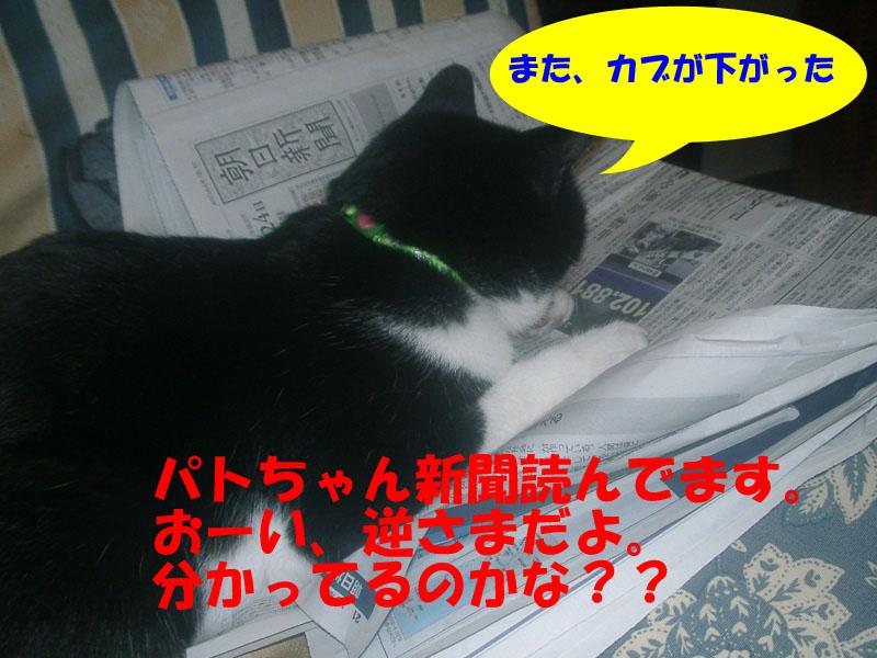 新聞を読むパト