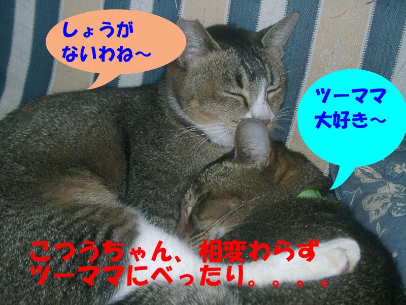ヤッパリマザコン