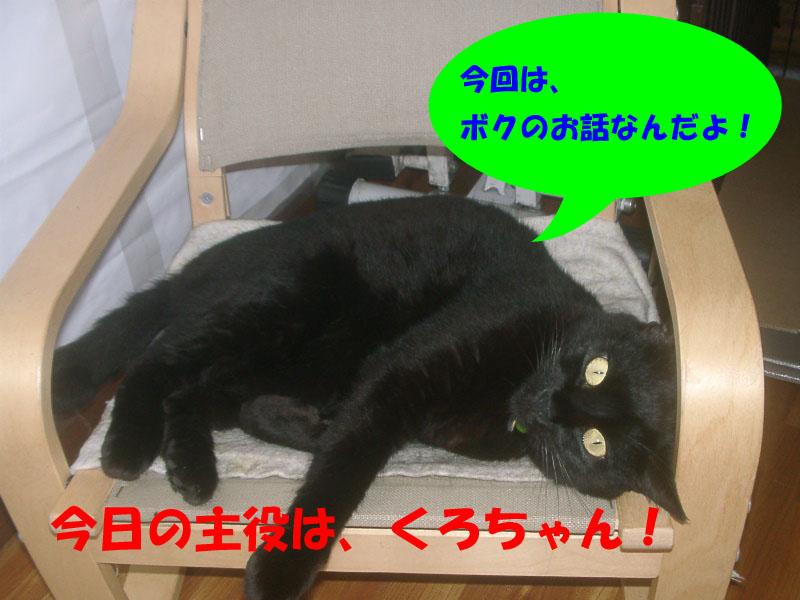 くろちゃん主役