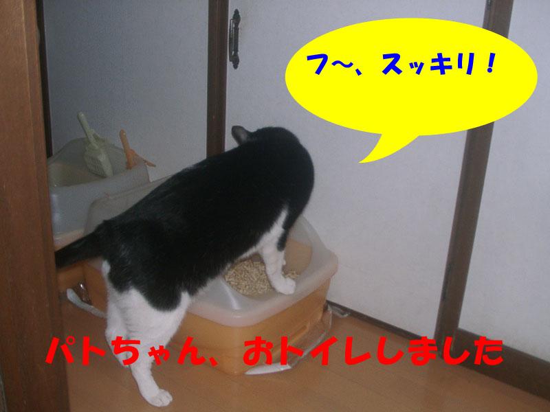 パトトイレ