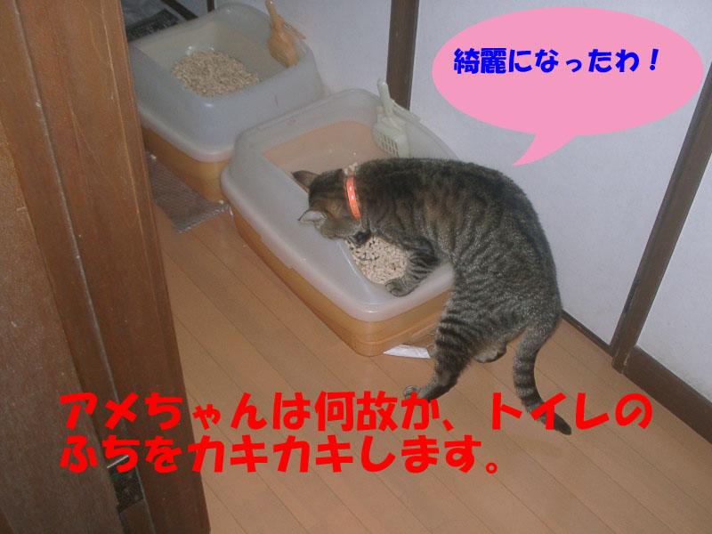 トイレのふちです