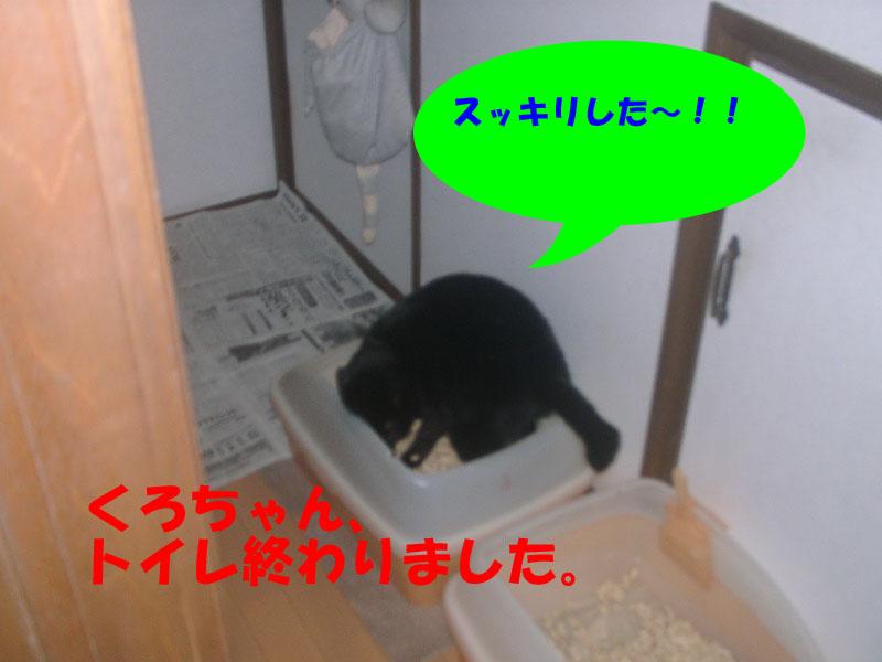 くろちゃんもトイレ