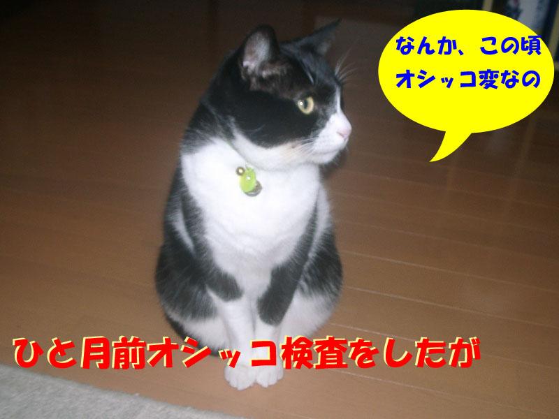パト異変1
