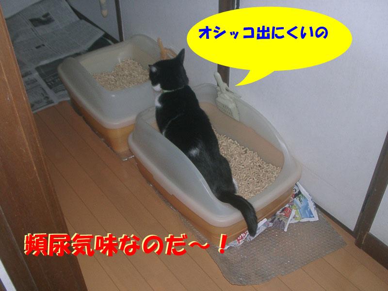 パト異変2