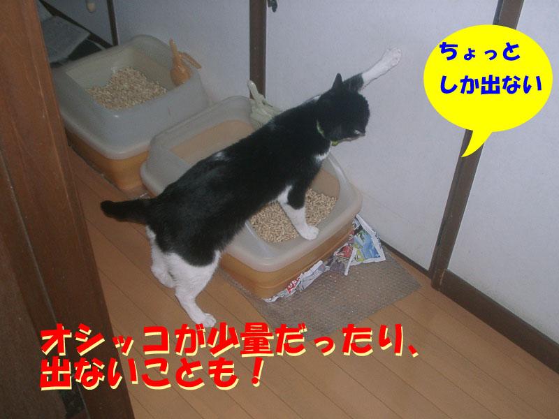 パト異変3