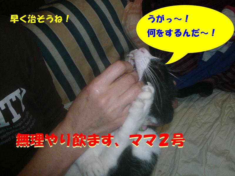 パト異変6