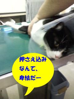P2011_0625_142539.jpg
