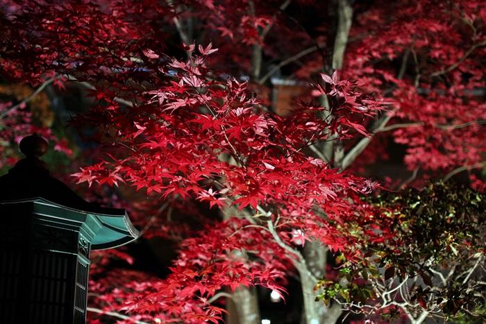 nobunobu1200500.jpg