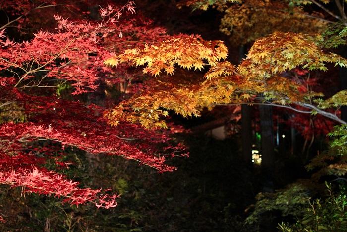 nobunobu1200504.jpg