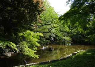 競馬場にある日本庭園