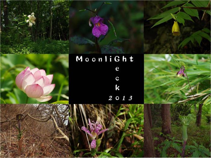 2013山野草