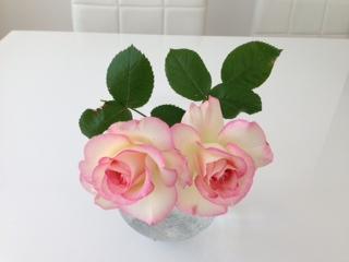 rose2.jpeg
