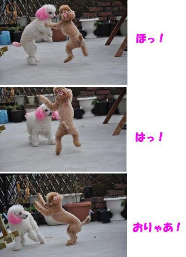 鑑賞用POP集 006