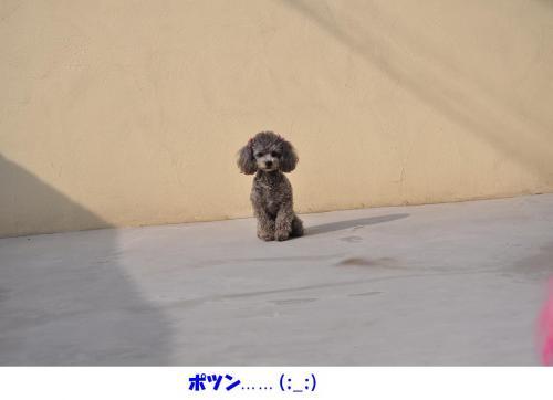鑑賞用POP集 029