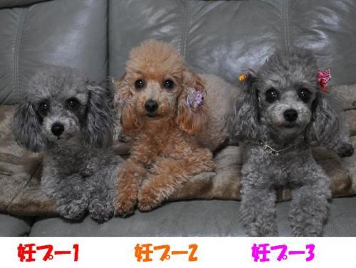 コピー ~ 鑑賞用POP集 020