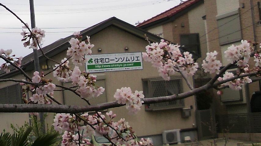 2010.04 さくら