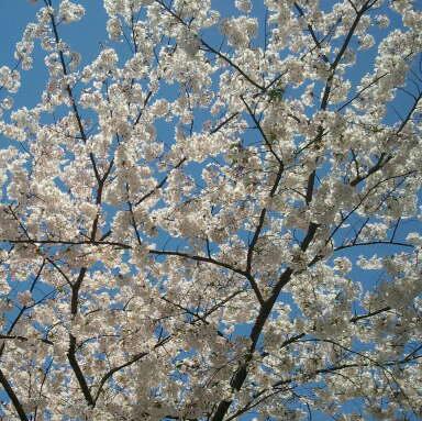 2011-04-13 11.08.36-1.jpg