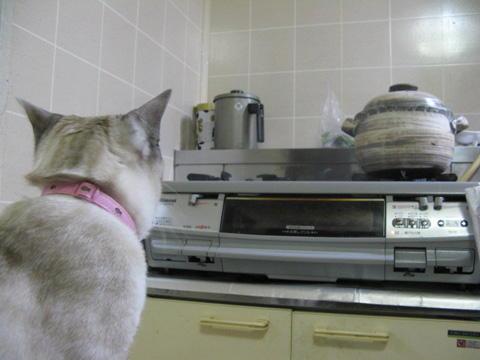 釜を見守る猫