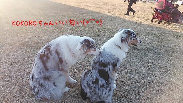rakugaki_20131201_0003_convert_20131216184059.jpg