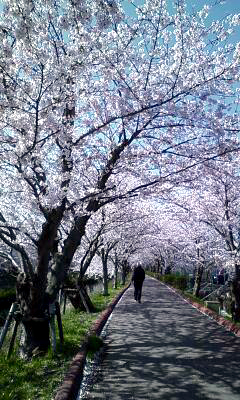 桜2010_05