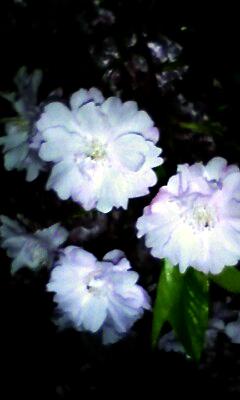 桜2010_07