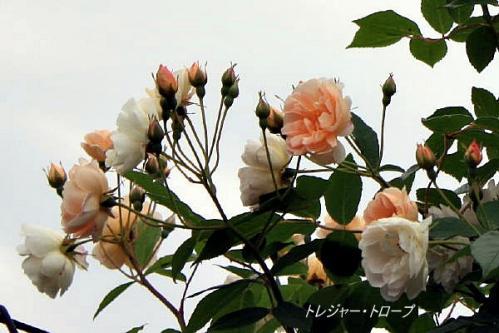 IMG_1664 (2)